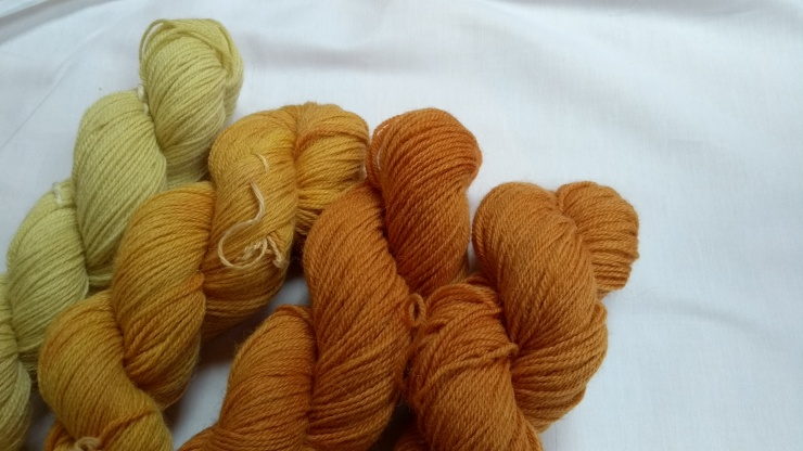natural_dye_yarrow_onion_skin_yarn_teinture_naturelle_achillé_oignon_laine[1]